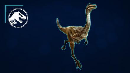 Species Profile - Gallimimus